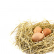 Fresh eggs brown — Stock Photo
