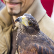 Medieval Fair, falconry — Stock Photo