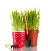 Green grass in two flowerpot isolated on white — Stock Photo