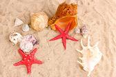 Conchas e estrelas do mar na areia — Foto Stock