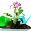 Beautiful purple primrose, soil, watering can and tools isolated on white - Stock Photo