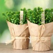 Thyme herb plants in pots with beautiful paper decor on wooden table on green background — Stock Photo #10112848
