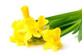 Beautiful yellow daffodils isolated on white — Stock Photo