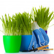 Beautiful grass in a flowerpots, garden tools and gloves isolated on white — Stock Photo