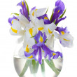 Beautiful bright irises in vase isolated on white - Stok fotoğraf