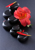 Spa stones, red flower and petals on grey background — Stock Photo