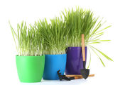 Beautiful grass in a flowerpots and garden tools isolated on white — Stock Photo