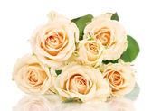 Beautiful roses isolated on white — Stock Photo