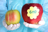 A scientist holds a genetically modified apple — Stock Photo