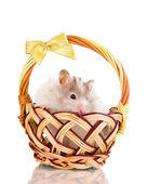 Cute hamster in basket isolated white — Stock Photo