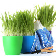 Stock Photo: Beautiful grass in a flowerpots, garden tools and gloves isolated on white