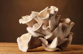Tavolo in legno funghi ostrica su sfondo marrone — Foto Stock