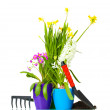 Beautiful spring flowers, soil and tools isolated on white - Stock Photo