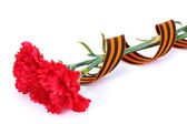 Carnations and St. George's ribbon isolated on white — Stock Photo