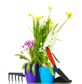 Beautiful spring flowers, soil and tools isolated on white — Stock Photo