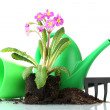 Beautiful purple primrose, soil, watering can and rake isolated on white — Stock fotografie