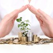 Woman hands with coins and plant isolated on white — Stock Photo #10347433