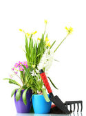 Flores lindas da primavera, do solo e ferramentas isoladas em branco — Fotografia Stock