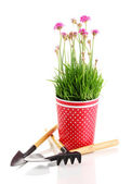 Pink flowers in pot with instruments isolated on white — Stock Photo