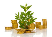 Golden coins and plant isolated on white — Stock Photo