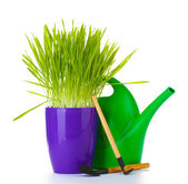 Beautiful grass in a flowerpot, watering can and garden tools isolated on white — Stock Photo