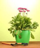 Rosa blommor i kruka med instrument på träbord på grön bakgrund — Stockfoto