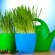Beautiful grass in a flowerpots, watering can and garden tools on wooden table on blue background — Zdjęcie stockowe