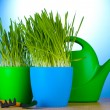 Beautiful grass in a flowerpots, watering can and garden tools on wooden table on blue background — ストック写真