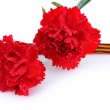 Постер, плакат: Carnations and St Georges ribbon isolated on white