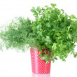Fresh parsley and dill in a red cup with white polka dots isolated on white — Stock Photo