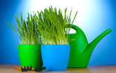 Beautiful grass in a flowerpots, watering can and garden tools on wooden table on blue background — Stock Photo