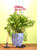 Pink flowers in pot with instruments on wooden table on green background — Stock Photo