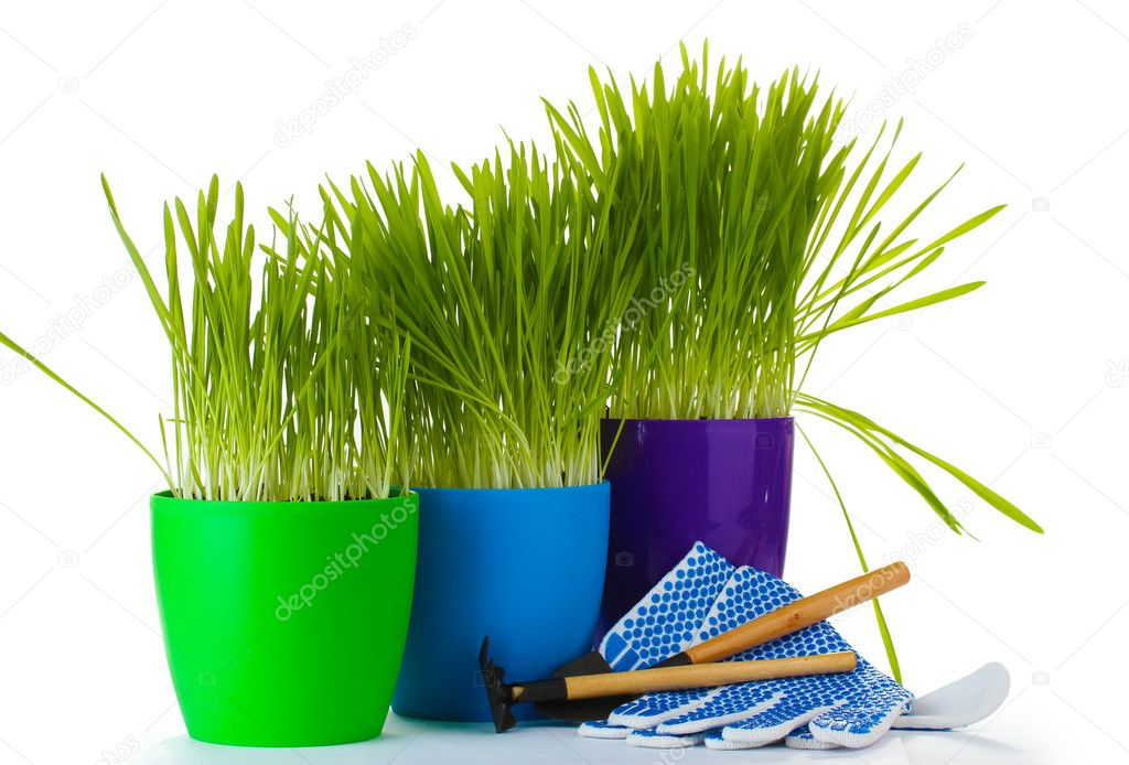 Beautiful grass in a flowerpots, garden tools and gloves isolated on white — Stock Photo #10414233