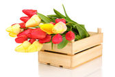 Beautiful tulips in crate isolated on white — Stock Photo