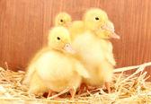 秸秆木质背景上的五个小鸭 — 图库照片