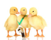 Three duckling and whistle isolated on white — Stockfoto