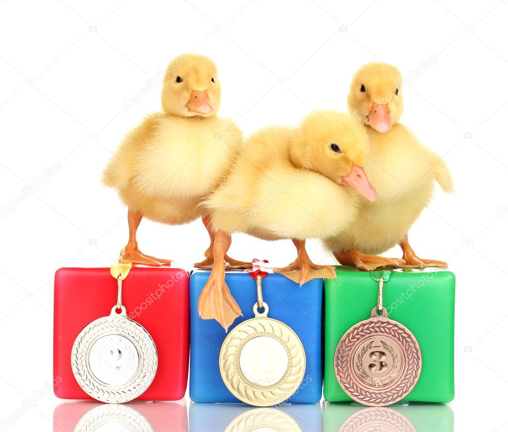 Three duckling on championship podium isolated on white  Foto Stock #10477429