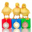 Three duckling on championship podium isolated on white — 图库照片