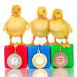 Three duckling on championship podium isolated on white — Foto Stock