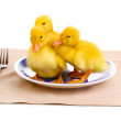 Duckling and table setting isolated on white - Stock Photo