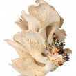 Oyster mushrooms isolated on white — Stock Photo #10585774