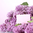 Stock Photo: Beautiful lilac flowers on purple background