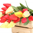 Royalty-Free Stock Photo: Beautiful tulips in crate isolated on white