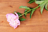 Pink peony on wooden background — Stock Photo