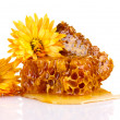 Stock Photo: Tasty honeycombs and flowers isolated on white