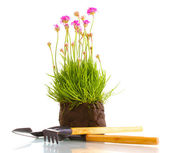 Pink flowers with instruments isolated on white — Stock Photo