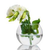 Cam aranjman beyaz izole güzel bahar çiçekleri — Stok fotoğraf