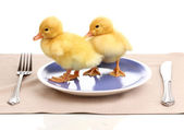 Duckling and table setting isolated on white — Stock Photo