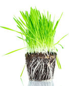 Green grass with the land isolated on white — Stock Photo