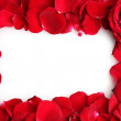 Beautiful petals of red roses and rose isolated on white — Stock Photo